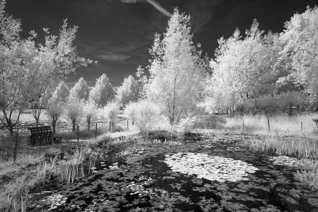 Teich mit Bäumen im Wood-Effekt - Infrarotfoto