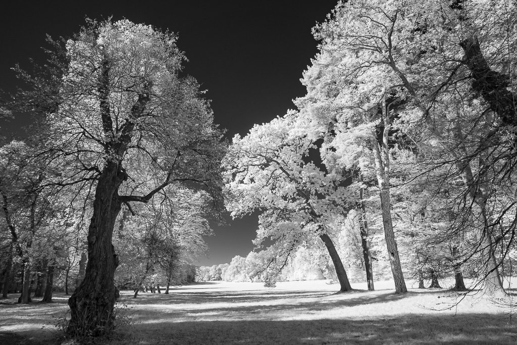 Im Schlosspark Nymphenburg München - Alte Bäume