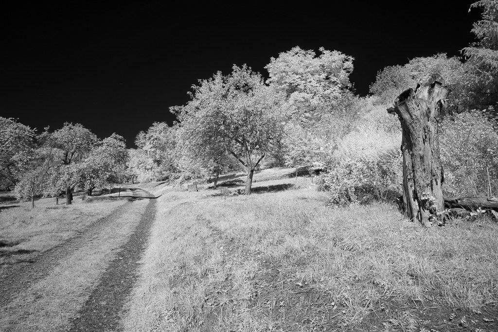 Feldweg und Obstbäume als Schwarzweiß-Infrarot-Foto