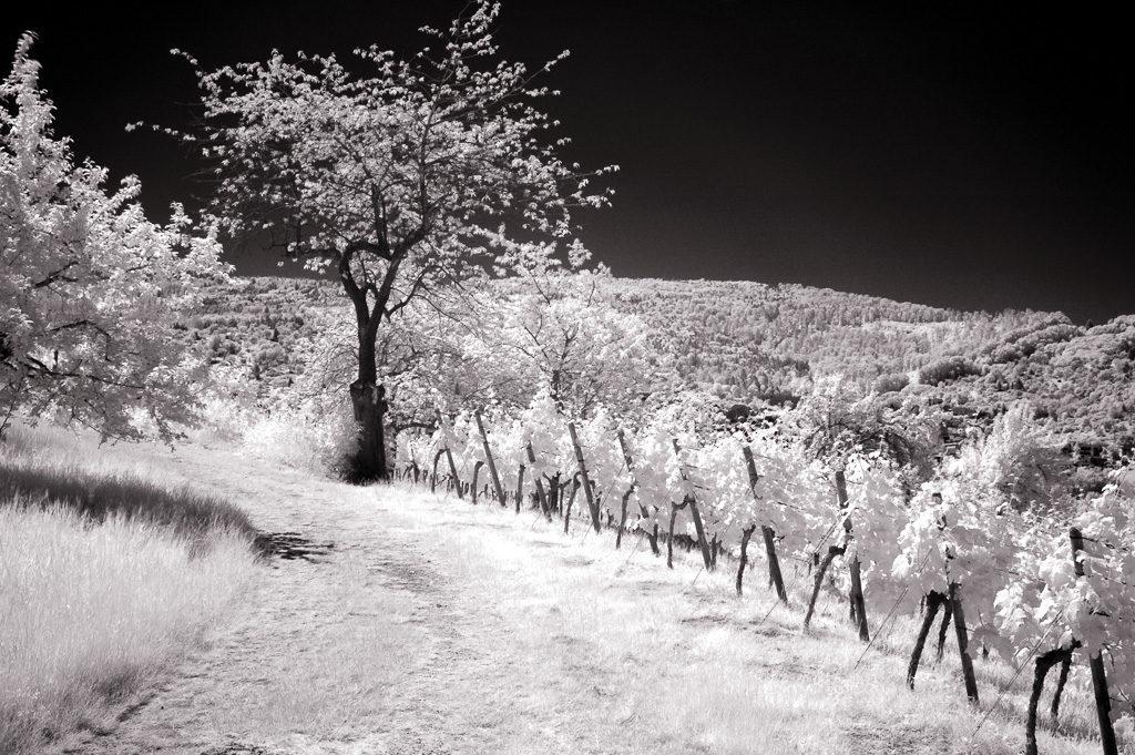 Landschaft als Schwarzweiß-Infrarot-Foto